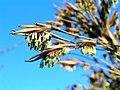 PICT0079 bambus-i-blomst 13apr2007 1200-81.jpg