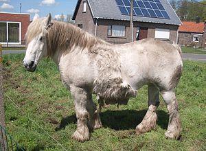Wat Zijn Paarden Depaardenwereld Jouwweb Nl