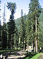 Pahalgam views 09.JPG
