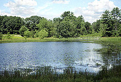An open pond