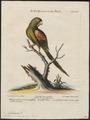 Palaeornis incarnatus - 1700-1880 - Print - Iconographia Zoologica - Special Collections University of Amsterdam - UBA01 IZ18500067.tif