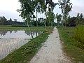 Palashbari Upazila, 5730, Bangladesh - panoramio.jpg