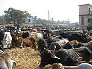 The growing demand for meat in developing countries may be aggravating the greenhouse gas spiral.