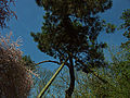 Parc Saint-Nicolas, Angers.jpg