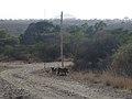 Parc national d'Awash-Ethiopie-Phacochères.jpg