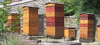 Ruches d'abeilles