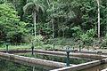 Parque Estadual da Pedra Branca - Pau da Fome 02.jpg