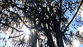 Parque Gallineral C.jpg
