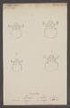 Passalus - Print - Iconographia Zoologica - Special Collections University of Amsterdam - UBAINV0274 018 14 0011.tif