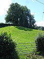 Pasture near Cwm Golau - geograph.org.uk - 628724.jpg