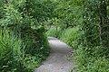 Path from Patrick Wood bridge.jpg