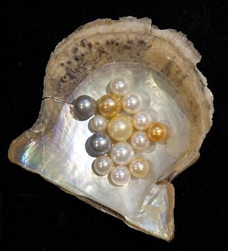"Tamraparni - Pearls have a historic connection with the Gulf of Mannar; two varieties, the ""Tamraparnika"" from the river Tamraparni and ""Pandyakavataka"" from the second Sangam seat Kapatapuram, are described by Kautilya"
