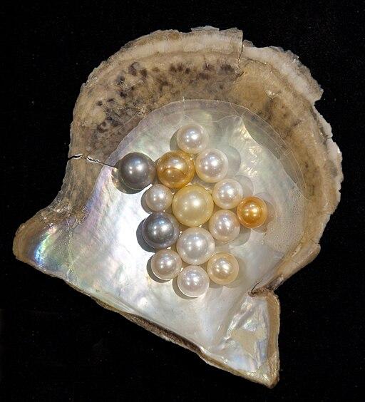 Pearl-variety hg