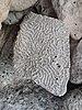 Pedras estrañas. Praia do Hotel Bahía Príncipe, Quintana Roo, México 3.jpg
