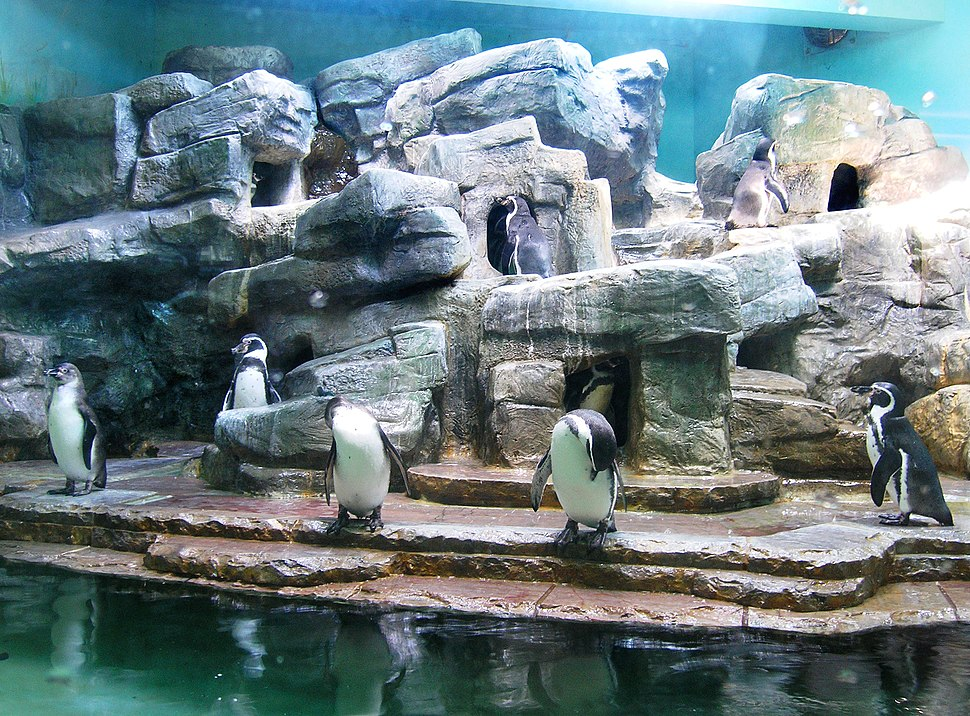 Penguinarium, Zoo Prague