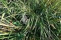 PermaLiv kanin 14-09-20.jpg