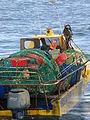 Pesca de centolla en la Bahía Ushuaia 19.JPG