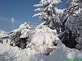 Petrovo Selo - panoramio (6).jpg