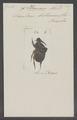 Phanaeus - Print - Iconographia Zoologica - Special Collections University of Amsterdam - UBAINV0274 019 07 0050.tif