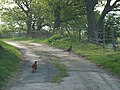 Pheasants on the road above Pontfadog - geograph.org.uk - 417600.jpg