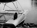 Photograph of Cub Bear on the Pontoons of a Plane - NARA - 2128336.tif