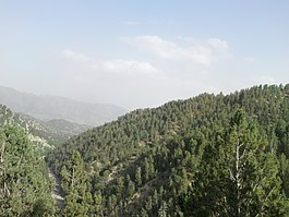 Pinus gerardiana forest, Khost Province, Afghanistan.jpg