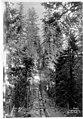 Pipe trench through Dunlap Canyon near Renton, eastern view, ca 1899 (SPWS 416).jpg