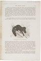 Pithecia satanas - 1700-1880 - Print - Iconographia Zoologica - Special Collections University of Amsterdam - UBA01 IZ20200242.tif