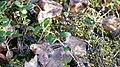 """Plants in """"storknabben"""" 2.jpg"""