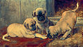 Playing Mastiff puppies By painter Jan van Essen.jpg