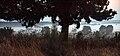 Podlasie Bug Gorge Landscape Park S45.jpg