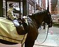 Police horses (91544837).jpg