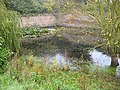 Pond, Ballingham Hall - geograph.org.uk - 999599.jpg