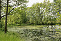 Pond by Lukoviště 2.jpg