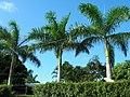 Port Vila city centre (7988939181).jpg