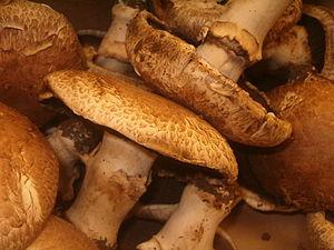 Agaricus bisporus - Image: Portobello mushrooms