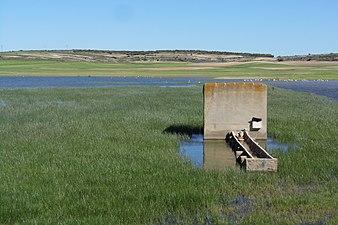 Pozo y bebedero en la orilla oeste de la Laguna Chica de Corral Rubio (Albacete).jpg