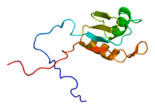 Protein RALY PDB 1wf1.png