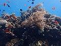 Puerto galera underwater (1).jpg