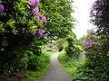 Purple flowers near Stranraer (6486975631).jpg