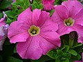 Purpleflowers6.jpg