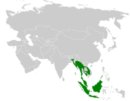Pycnonotus atriceps distribution map.png