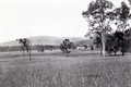 Queensland State Archives 4170 Scenes on farm of Mr Davidson Beenleigh September 1933.png