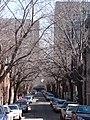 """RUE ST-CHRISTOPHE, MONTRÉAL (vue vers la """"Place Dupuis"""") - panoramio - busand2003.jpg"""