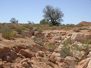 Unintended consequences - An erosion gully in Australia caused by rabbits. The release of rabbits in Australia for hunting purposes has had serious unintended ecological consequences.