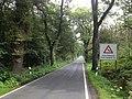 Radweg L 3229 Reinhardswald.JPG