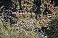 Rainie Falls Trail (34837501922).jpg