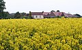 Rape Field, Hanley Castle - geograph.org.uk - 806129.jpg