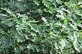 Red Oak 19-10-04 183.jpg