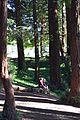 Redwood Memorial Grove 18 2017-06-12.jpg
